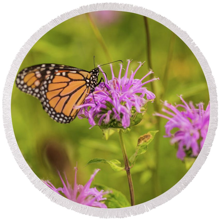August Round Beach Towel featuring the photograph Monarch Butterfly On Bee Balm Flower by Carol Mellema