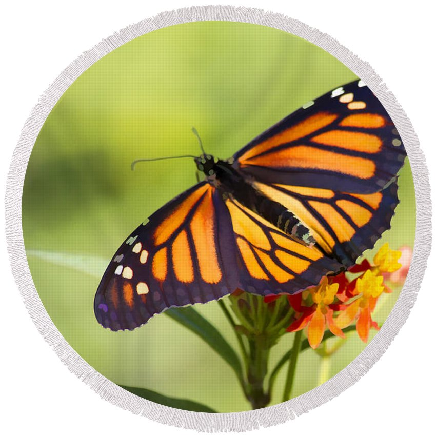 Butterfly Round Beach Towel featuring the photograph Monarch Butterfly by Teresa Zieba