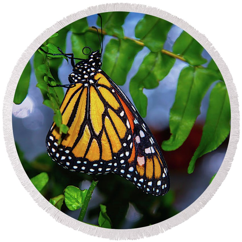 Hanging Round Beach Towel featuring the photograph Monarch Feeding by Garry Gay