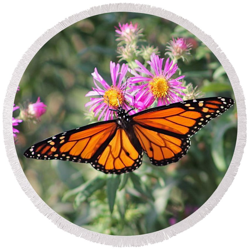 Monarch Round Beach Towel featuring the photograph Monarch On Blanket Flower by Wayne Williams
