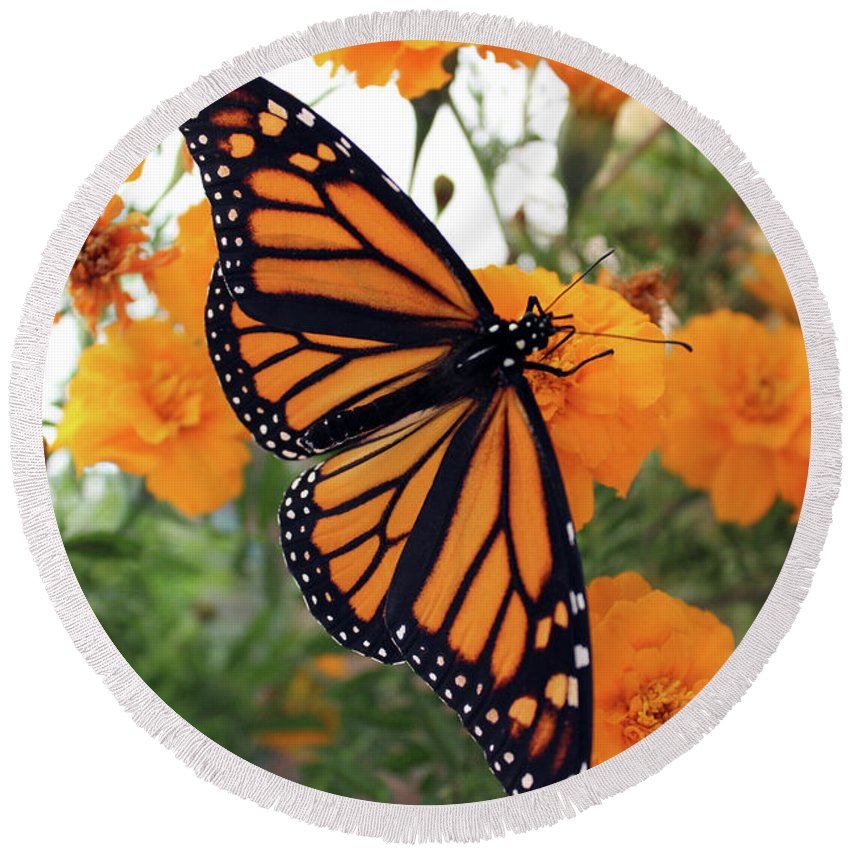 Bugs Round Beach Towel featuring the photograph Monarch Series 1 by Samantha Burrow