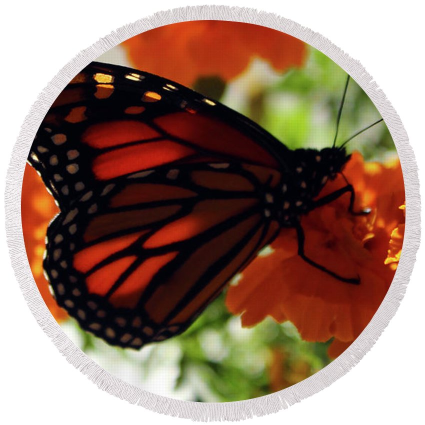 Monarch Round Beach Towel featuring the photograph Monarch Series 8 by Samantha Burrow
