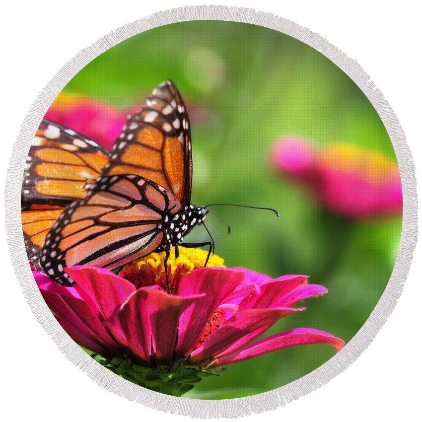 Pink Round Beach Towel featuring the photograph Monarch Visiting Zinnia by Angela Rath