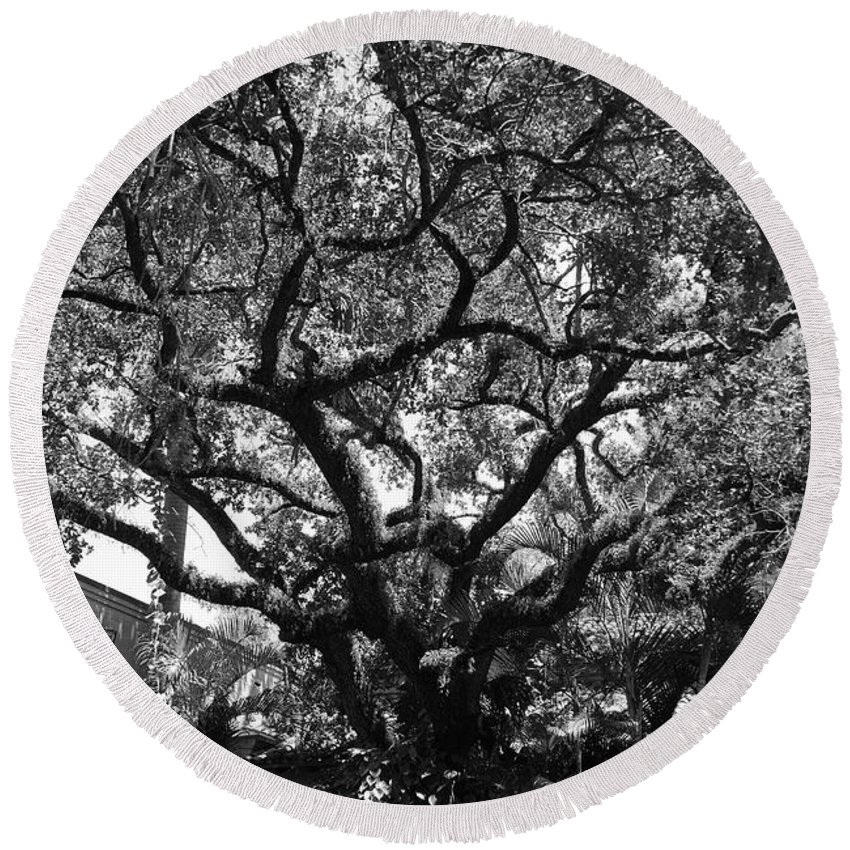 Black And White Round Beach Towel featuring the photograph Monastery Tree by Rob Hans