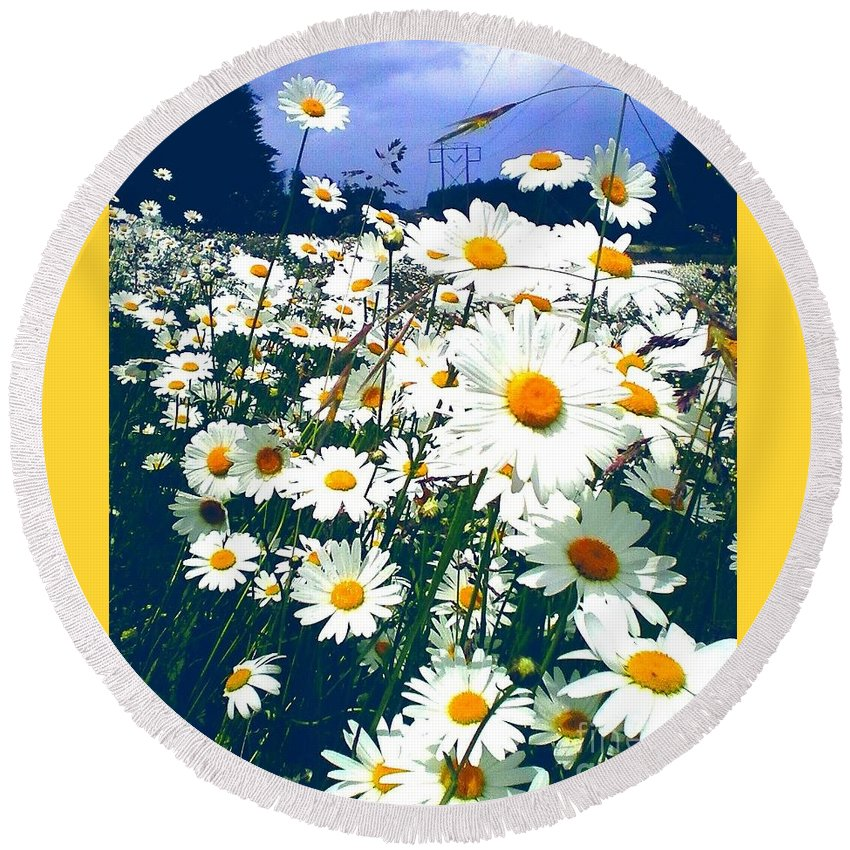 Flowers Round Beach Towel featuring the photograph Moon Daisies by Eve Penman