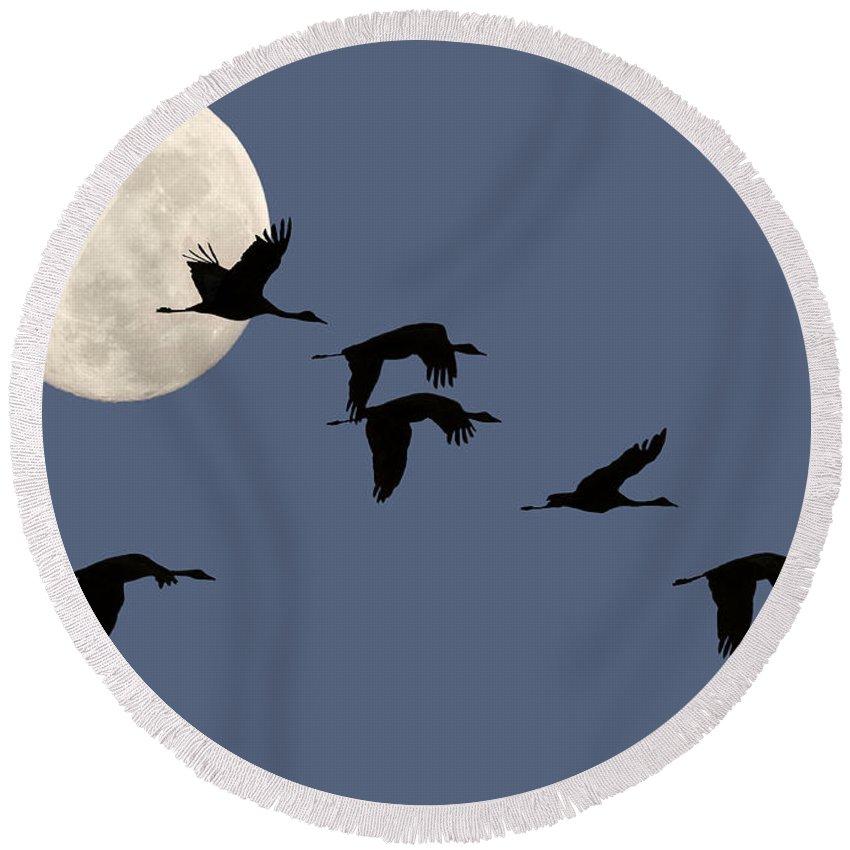 Bird Round Beach Towel featuring the photograph Moon Flight by Sharon Foster