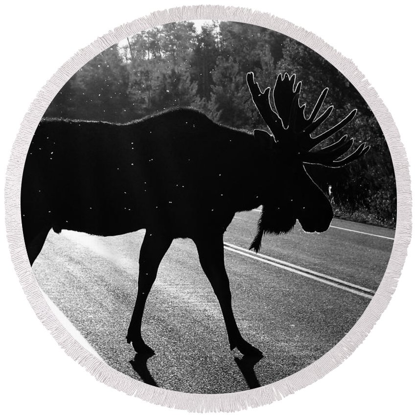 Bull Moose Round Beach Towel featuring the photograph Moose Crossing by LeAnne Perry