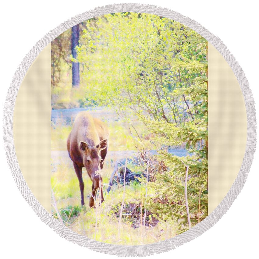 Moose In The Yard Round Beach Towel featuring the photograph Moose In The Yard by Lori Mahaffey