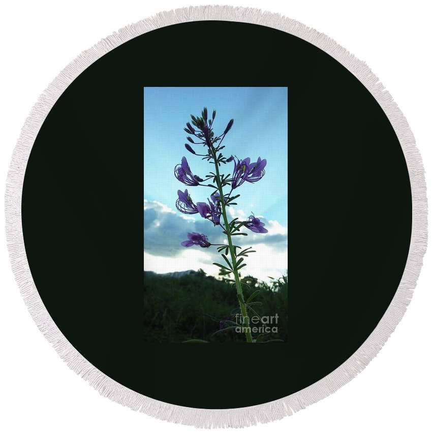 Flower Round Beach Towel featuring the photograph Morning Glory by Elizabeth Doto