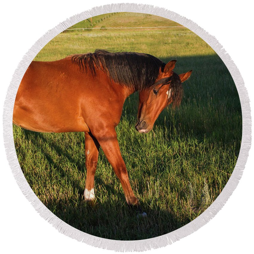 Horse Round Beach Towel featuring the photograph Morning Greeting by Alana Thrower