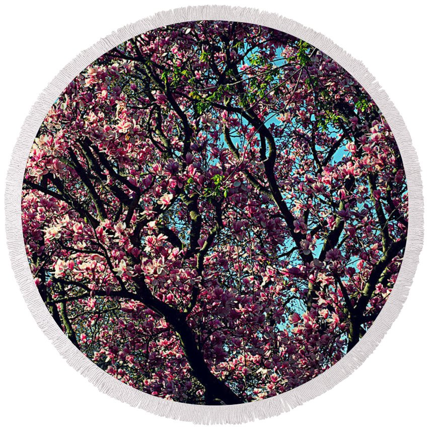 Frank J Casella Round Beach Towel featuring the photograph Morning Lit Magnolia by Frank J Casella