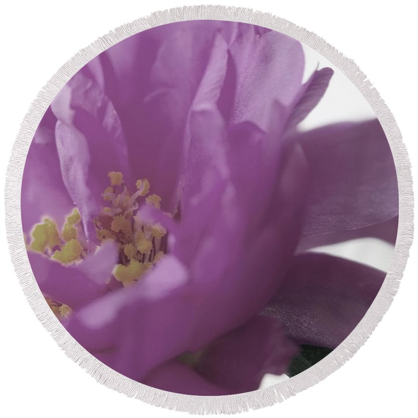 Macro Round Beach Towel featuring the photograph Moss Rose IIi by Lauren Radke