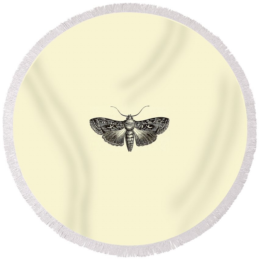 Wings Round Beach Towel featuring the drawing Moth by FL collection