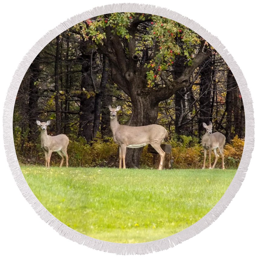 Deer Round Beach Towel featuring the photograph Mother Of Two by William Tasker