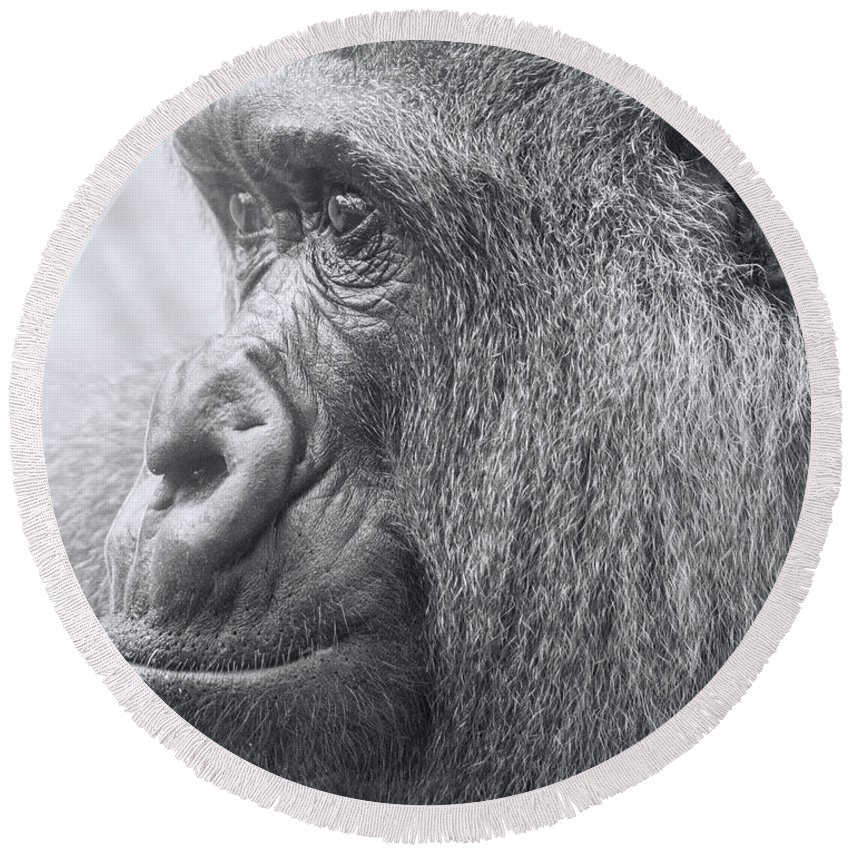 Gorilla Round Beach Towel featuring the photograph Motherhood Contemplation by James Ekstrom