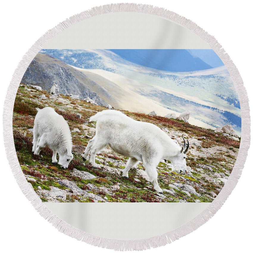 Mountain Round Beach Towel featuring the photograph Mountain Goats 1 by Marilyn Hunt