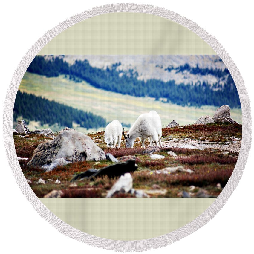 Animal Round Beach Towel featuring the photograph Mountain Goats 2 by Marilyn Hunt
