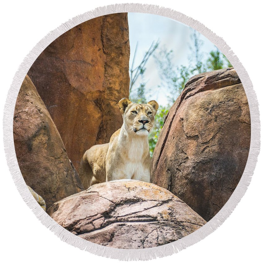 Lion Round Beach Towel featuring the photograph Mountain Lion by Pamela Williams