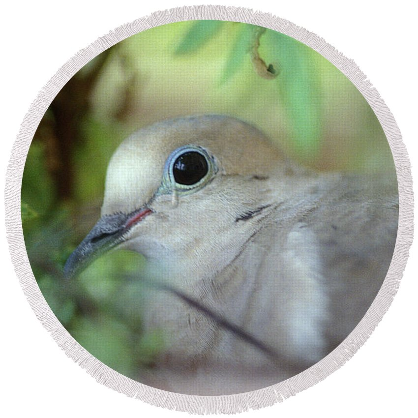 Bird Round Beach Towel featuring the photograph Mourning Dove by Yuri Lev