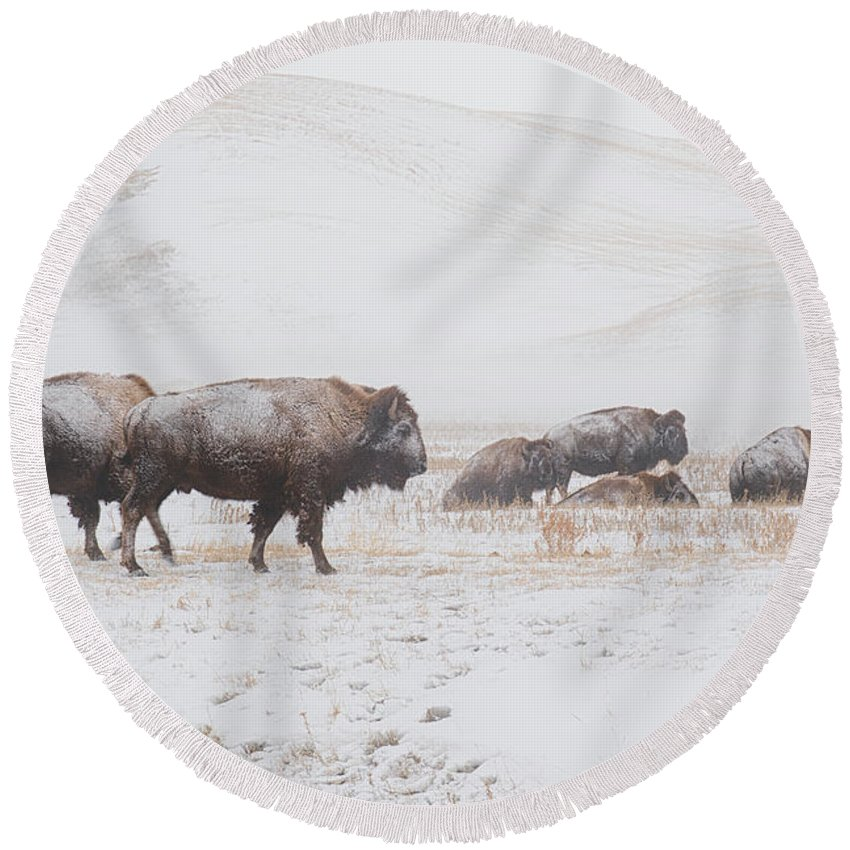 Buffalo Round Beach Towel featuring the photograph Move Out by Derald Gross