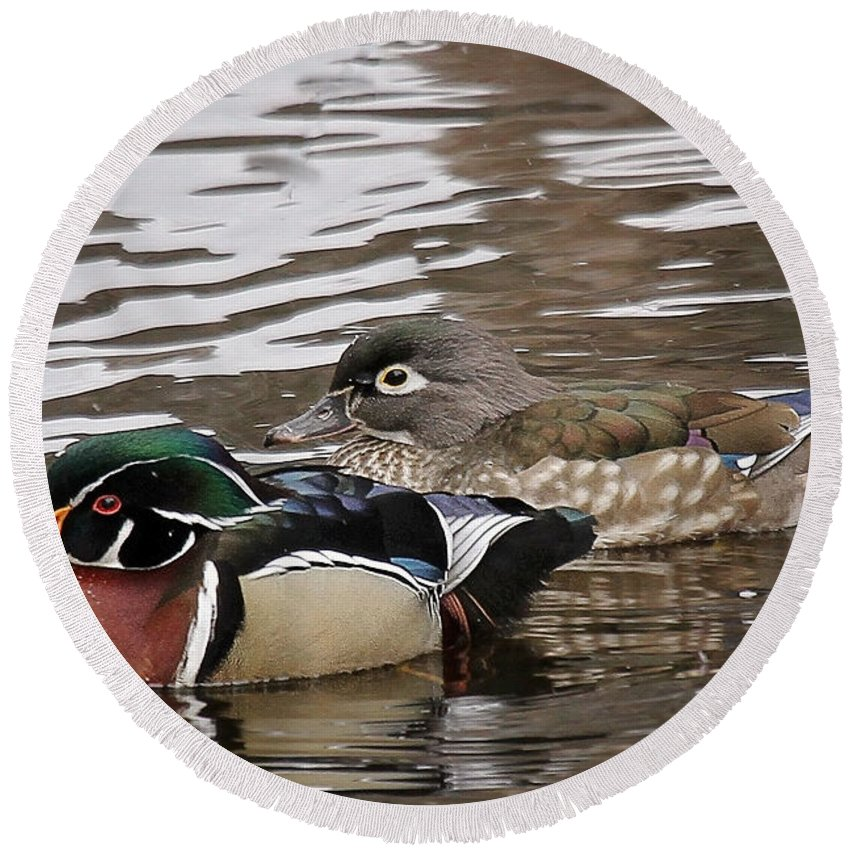 Maine Wildlife Round Beach Towel featuring the photograph Mr. And Mrs. Wood Duck by Sharon Fiedler