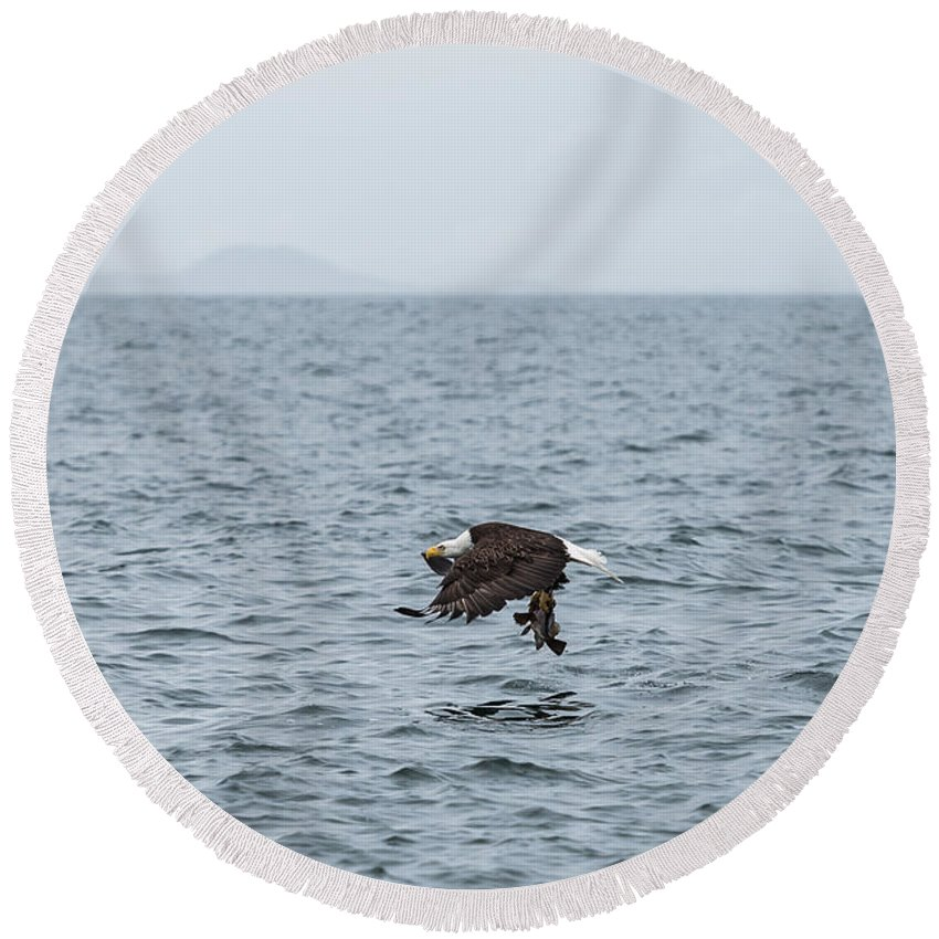 Nature Round Beach Towel featuring the photograph Mr Bald Eagle Gets Dinner by Tom Rostron