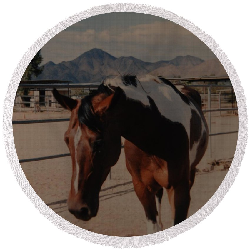 Horse Round Beach Towel featuring the photograph Mr Ed by Rob Hans