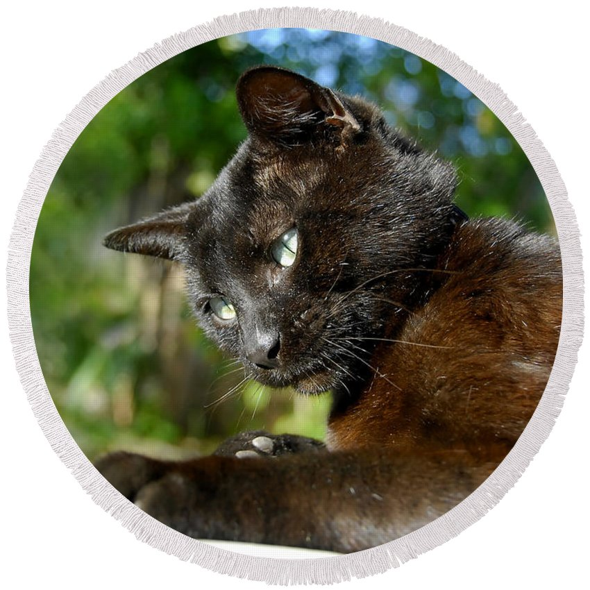 Cat Round Beach Towel featuring the photograph Mr. Night by David Lee Thompson