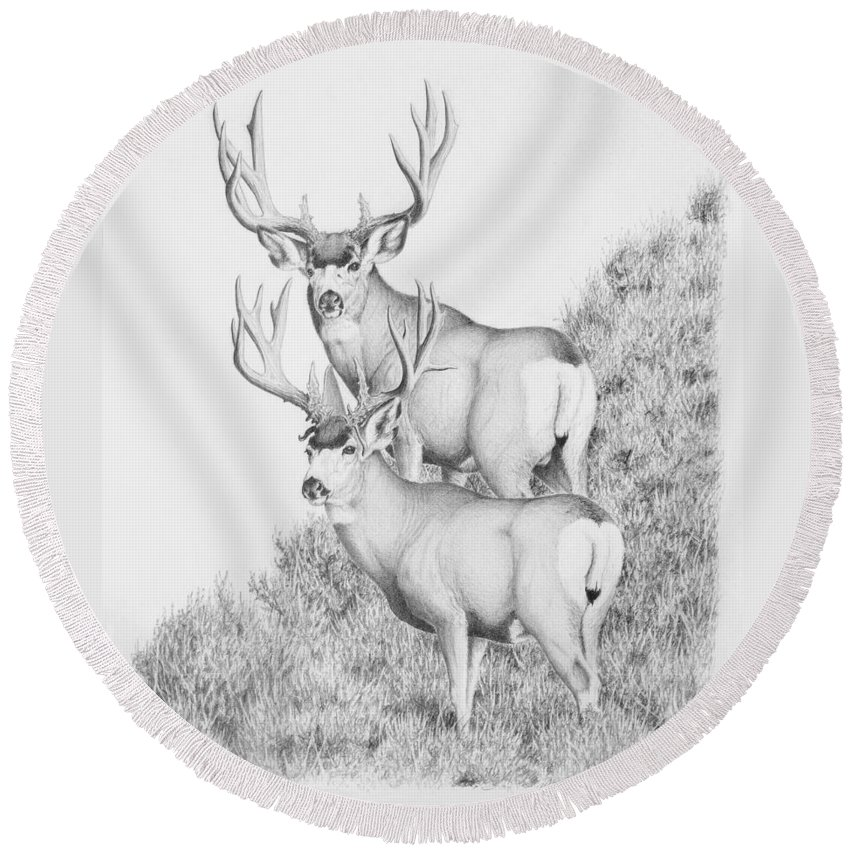 Mule Deer Round Beach Towel featuring the photograph Mule Deer Study by Darcy Tate