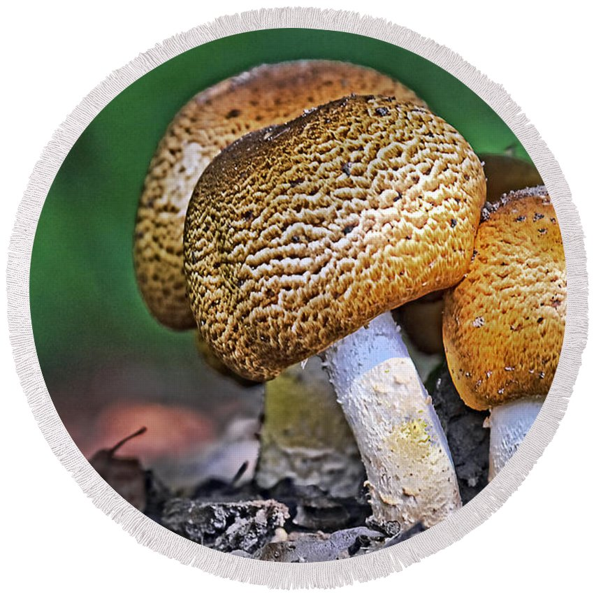 Plant Round Beach Towel featuring the photograph Mushrooms by Marcia Colelli