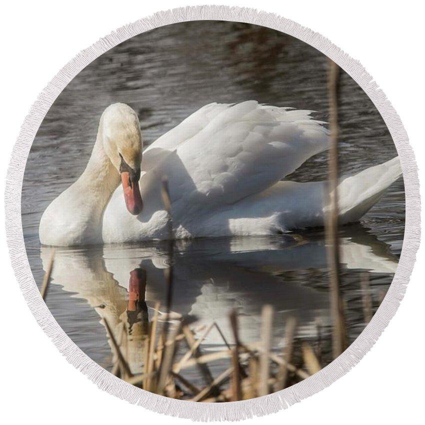 Mute Swan Round Beach Towel featuring the photograph Mute Swan - 3 by David Bearden