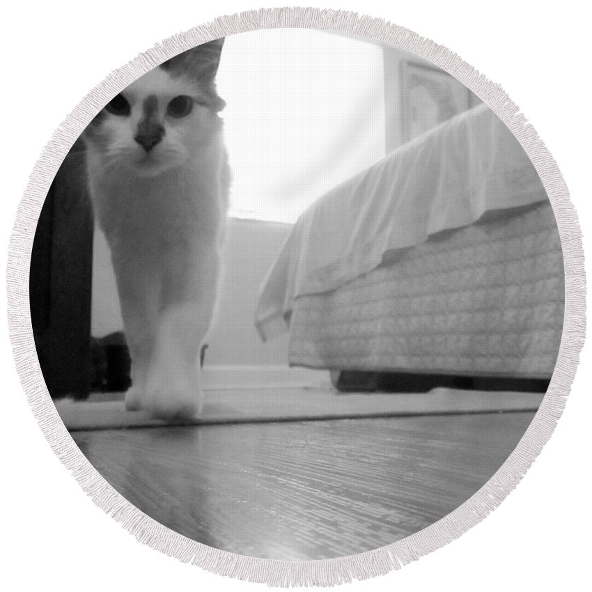 Kitty Round Beach Towel featuring the photograph My Brothers Keeper by Pattie Frost