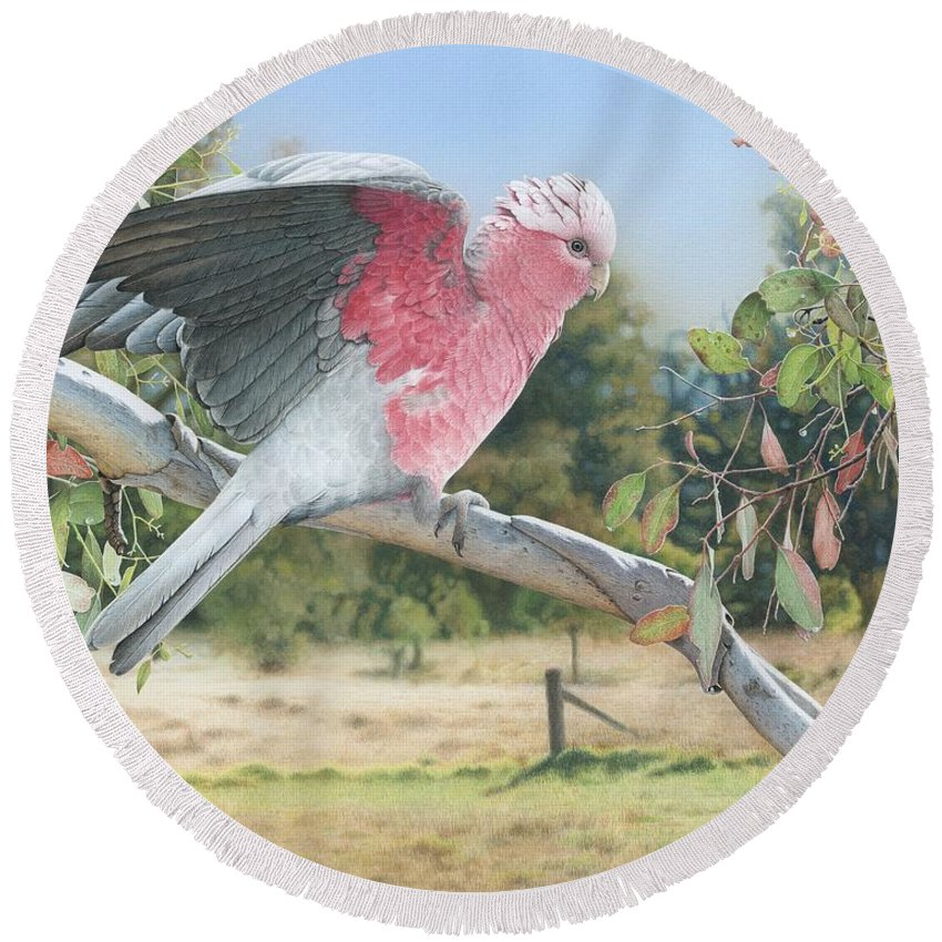 Galah Round Beach Towel featuring the painting My Country - Galah by Frances McMahon