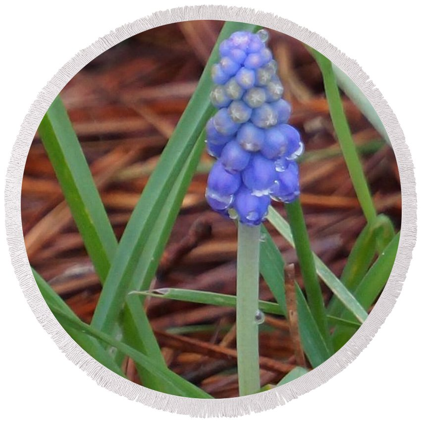 Bluebells Round Beach Towel featuring the photograph My First Bluebells by Maxine Billings