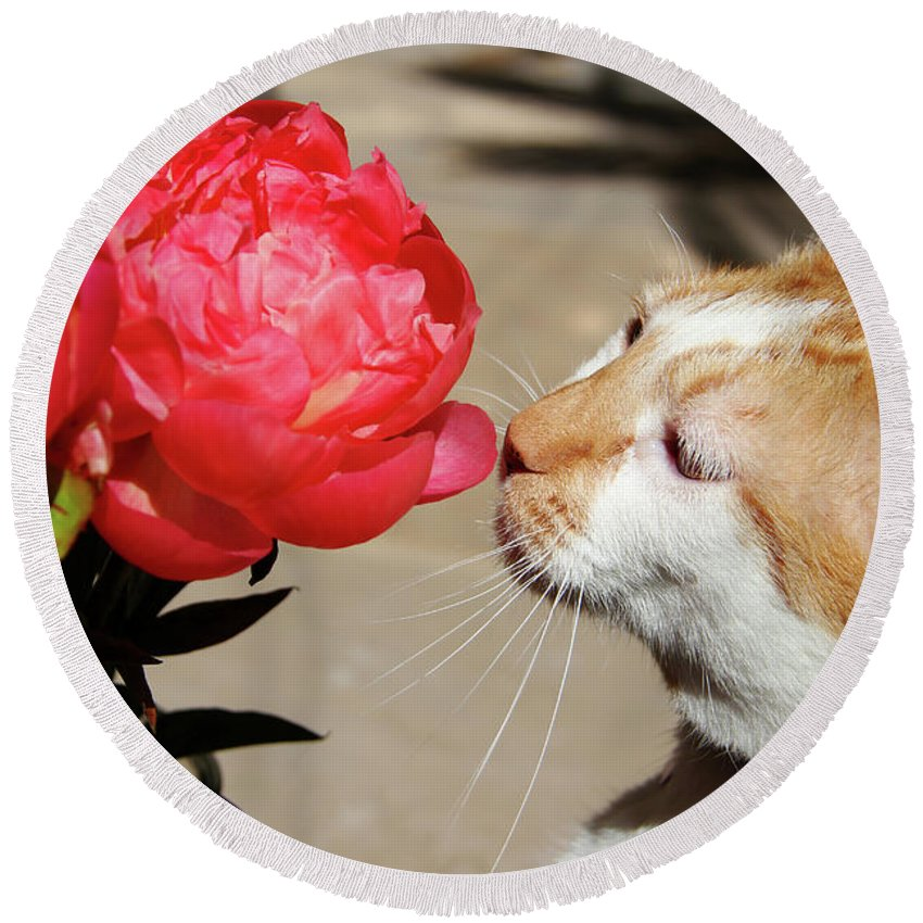 My Kitty In Love With A Peony Round Beach Towel featuring the photograph My Kitty In Love With A Peony by Mariola Bitner