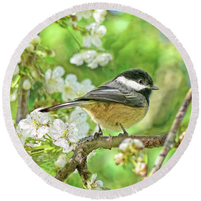 Chickadee Round Beach Towel featuring the photograph My Little Chickadee In The Cherry Tree by Jennie Marie Schell