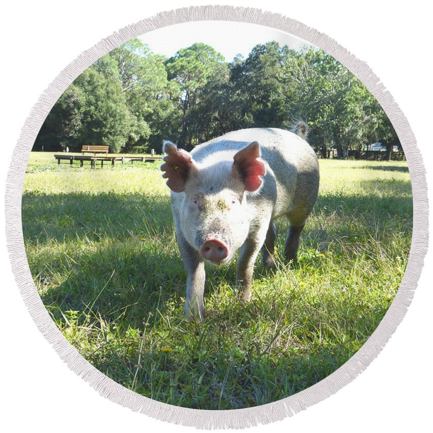 Pig Round Beach Towel featuring the photograph My Nicki by To-Tam Gerwe