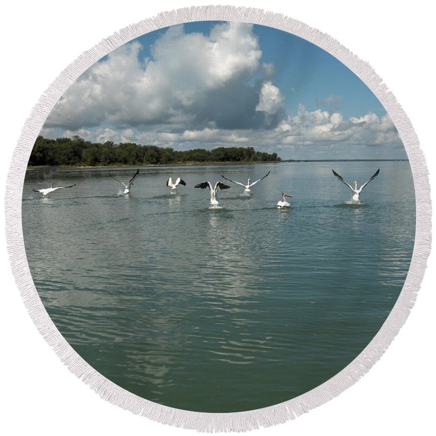 Pelicans Lake Water Trees Shore Beach Clouds Birds Water Foul Round Beach Towel featuring the photograph My Pelicans by Andrea Lawrence