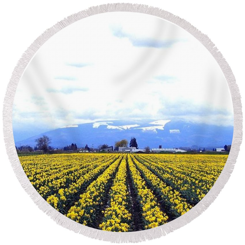 Daffodils Round Beach Towel featuring the photograph Myriads Of Daffodils by Will Borden