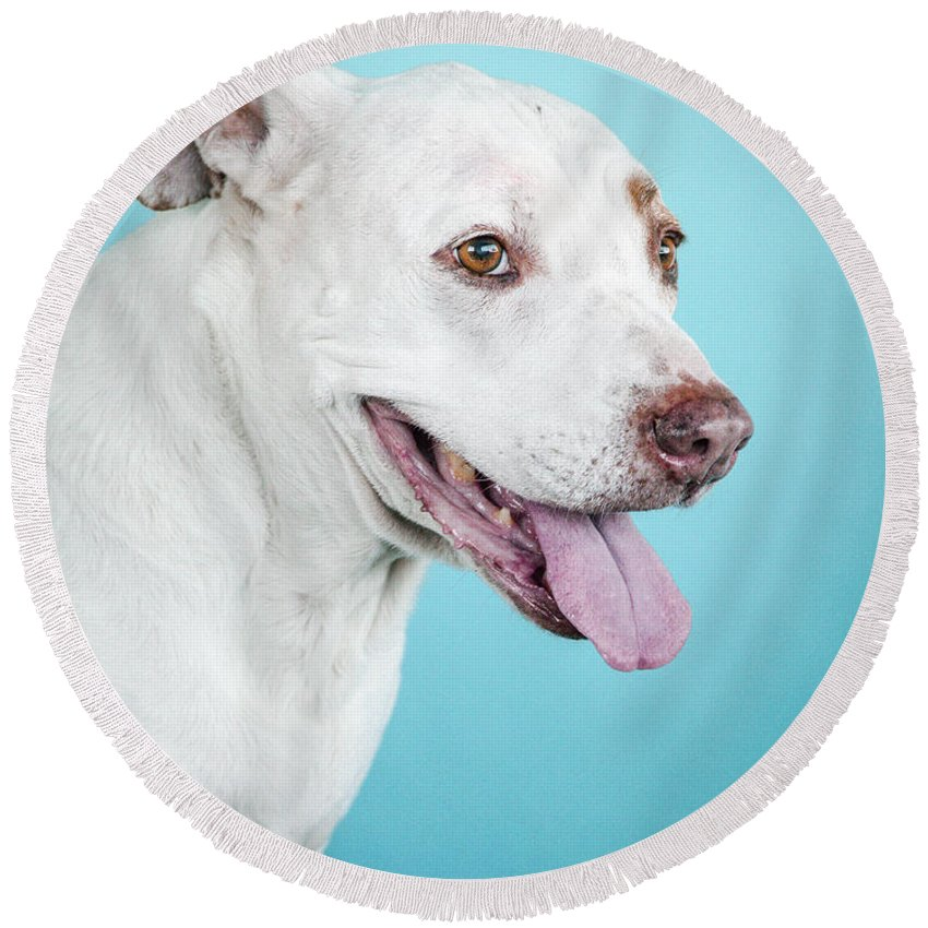 Dog Round Beach Towel featuring the photograph Nalu 1 by Pit Bull Headshots by Headshots Melrose