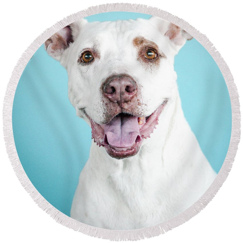 Dog Round Beach Towel featuring the photograph Nalu 3 by Pit Bull Headshots by Headshots Melrose