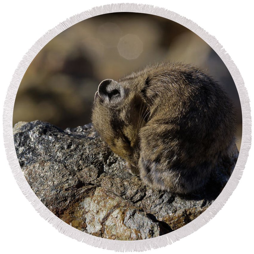 American Pika Round Beach Towel featuring the photograph Napping American Pika - 4694 by Jerry Owens