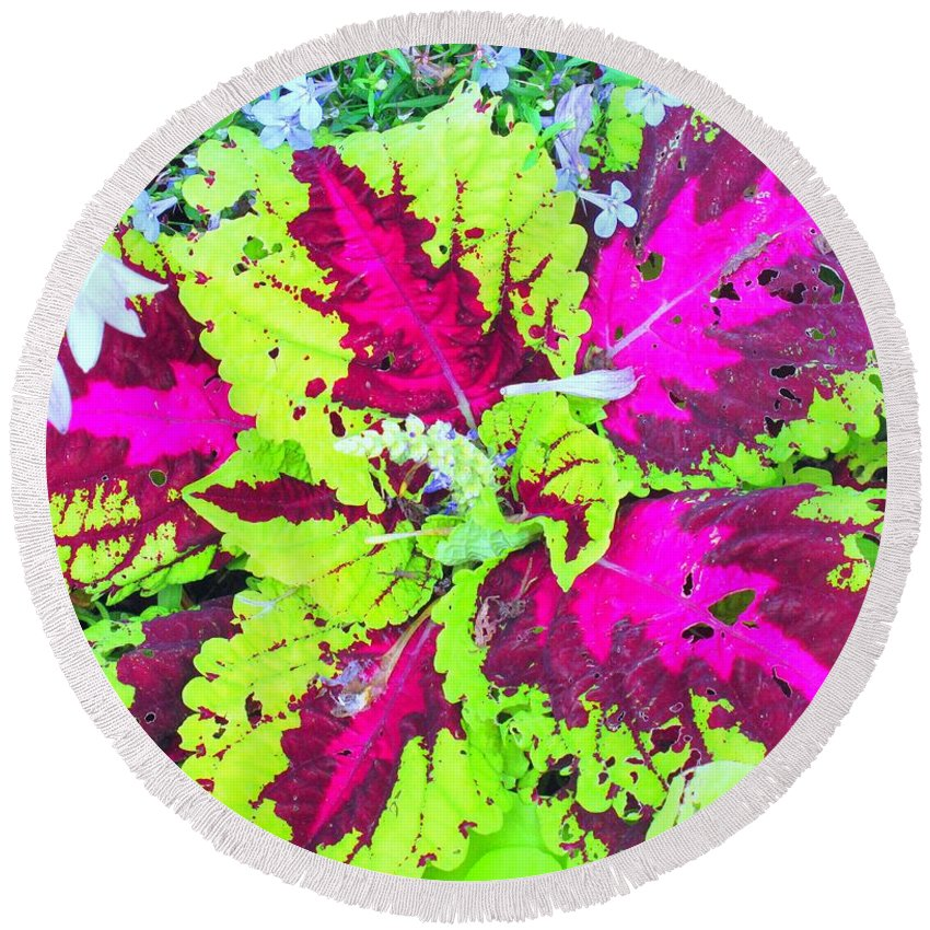 Flower Round Beach Towel featuring the photograph Natural Abstraction by Ian MacDonald