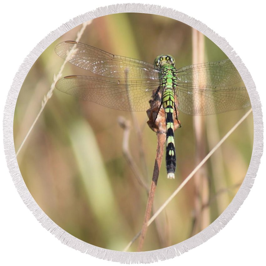 Green Dragonfly Round Beach Towel featuring the photograph Natural Canvas With Dragonfly by Carol Groenen