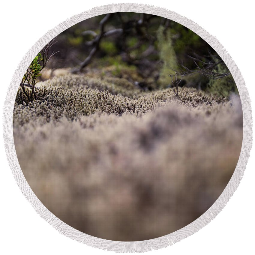 Nature Detail Patagonia Region Argentina Round Beach Towel featuring the photograph Nature Detail by Rodrigo Kaspary