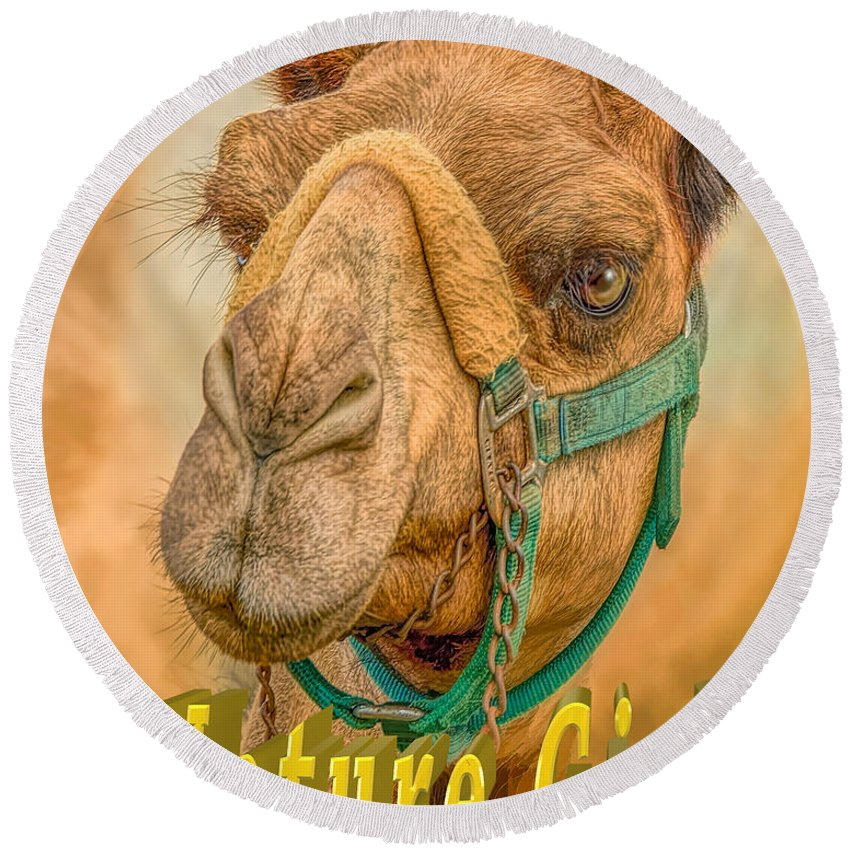 Not Wednesday Camel Round Beach Towel featuring the photograph Nature Girl Camel by LeeAnn McLaneGoetz McLaneGoetzStudioLLCcom