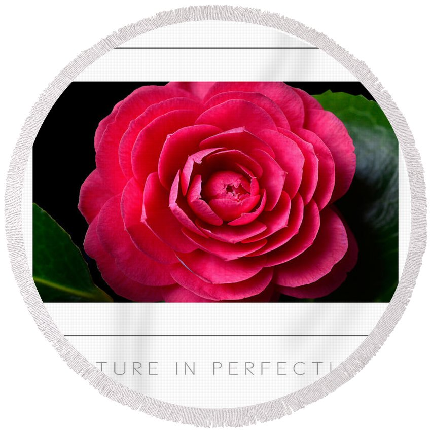 Camellia Round Beach Towel featuring the photograph Nature In Perfection Poster by Mike Nellums