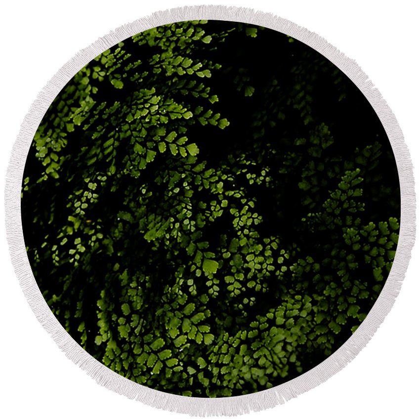 Nature Plants Tropical Leaf Leaves Tropical Leaves Green Jungle Botany Branches Flora Floral Droplets Natural Forest Wild Branch Wild Nature Color Black Round Beach Towel featuring the digital art Nature Plants by Nini Pakempitan