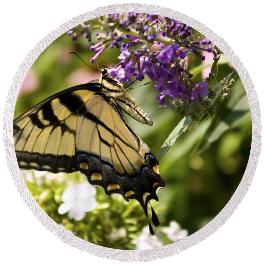 Butterfly Round Beach Towel featuring the photograph Nature's Canvas by Scott Wyatt