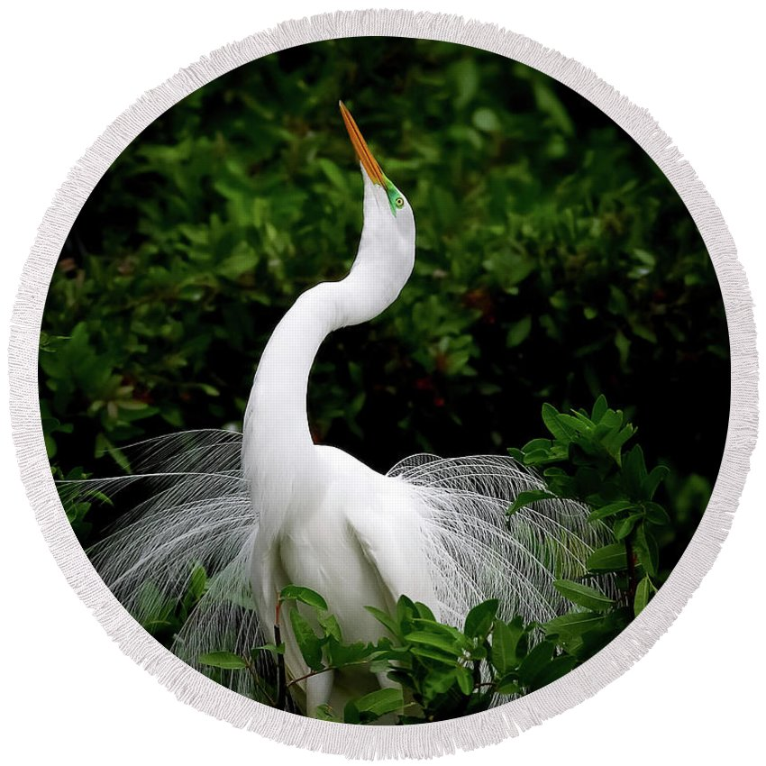 Great Egret Round Beach Towel featuring the photograph Nature's Glory by Dennis Goodman